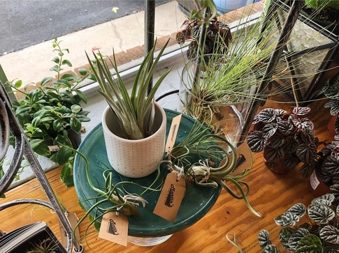 Air plants - Martin's Home & Garden - Murfreesboro, TN