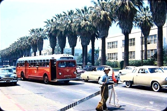 Palm trees along Sunset Blvd in front of Hollywood High School, 1950s