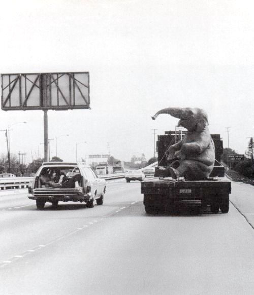 Transporting an animatronic elephant from Disney's Burbank studios to Disneyland for the Jungle Cruise, 1962