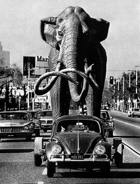 Sculptor Howard Ball tows his life-size mammoth to the La Brea tar pits in Los Angeles, January 1967