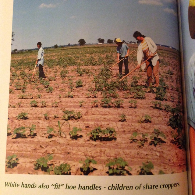 The author was sure to point out that some share croppers were White folks.