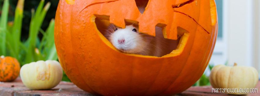 FB_pumpkin2