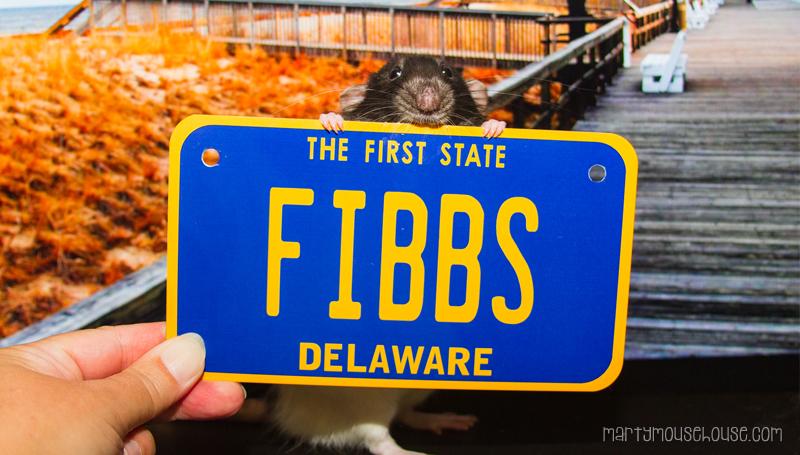 fibbs_DE