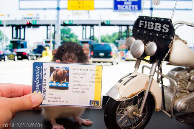 fibbs_PAdribe