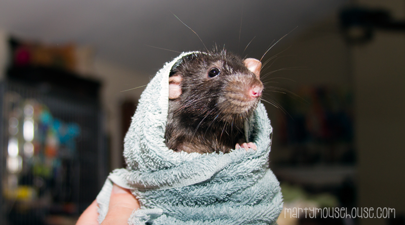 fibbs_towel2