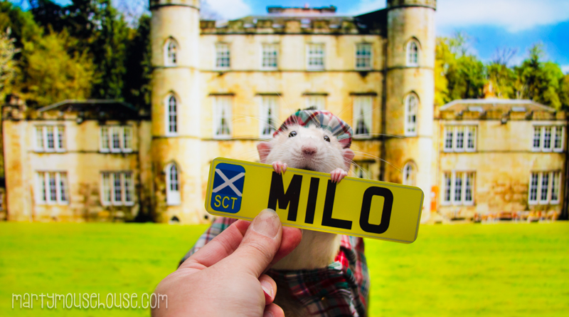 milo_scotland