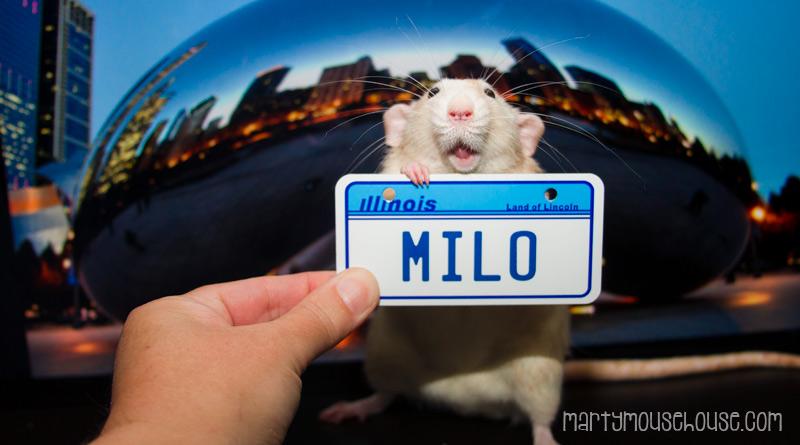 IL_milo