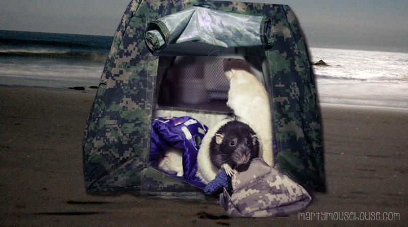 _fibbs_camping