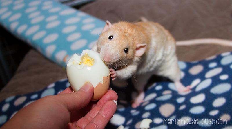 wimbley_egg