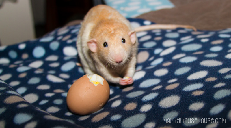 wimbley_egg2