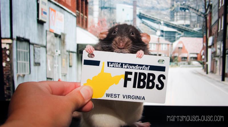 WV_fibbs