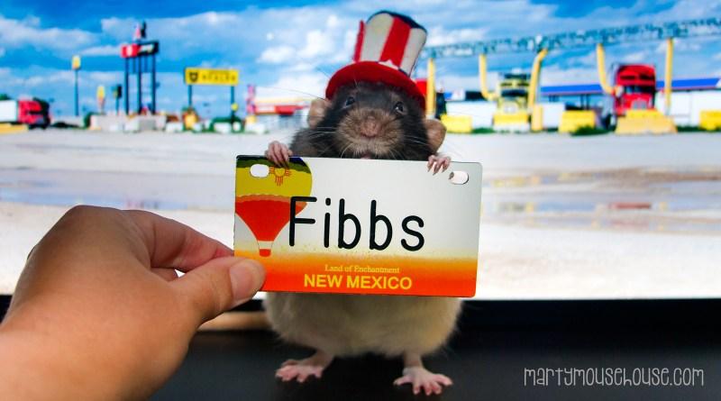 Fibbs_NewMexico2