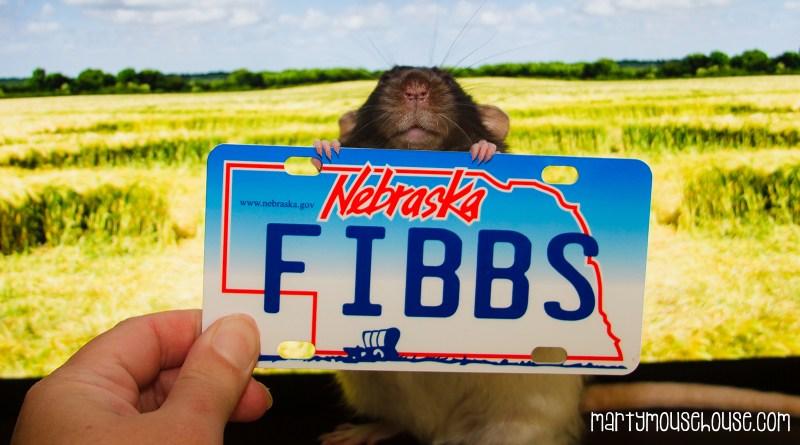 ne_fibbs2