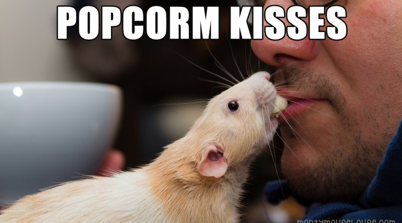 It's Popcorm Day!