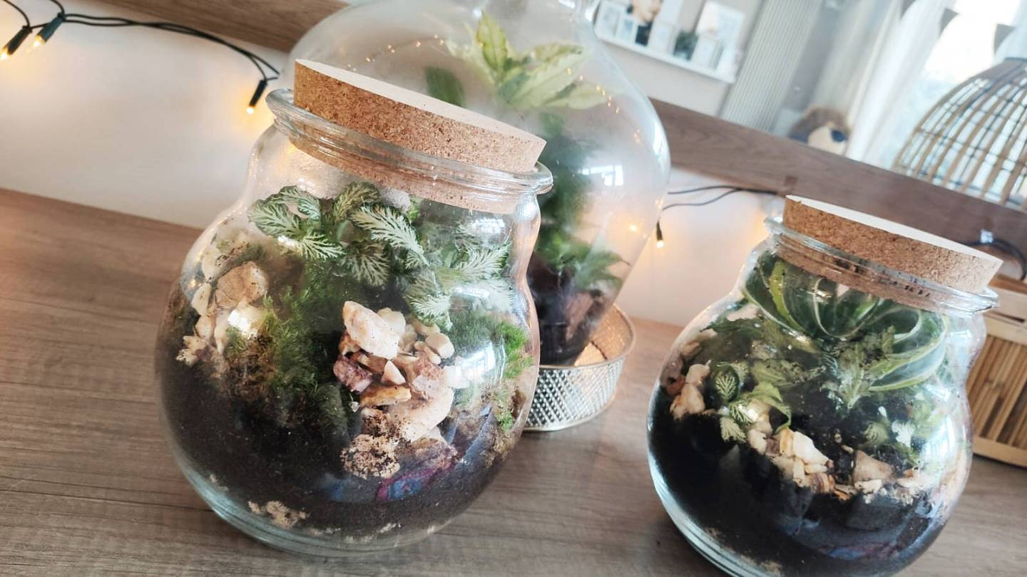 Mijn soldier terrariums van Plant Rebels