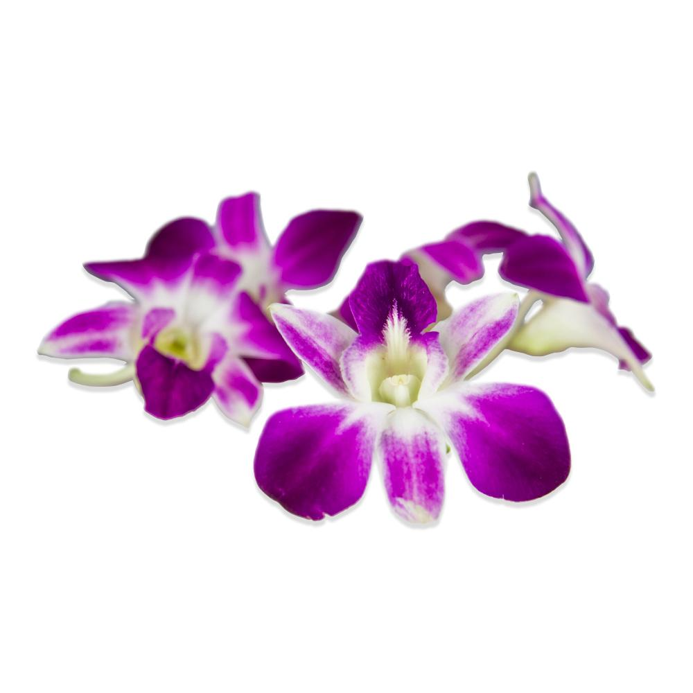 Edible Orchids In Bulk Karma Orchids Marx Foods