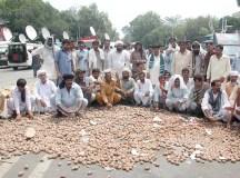 پاکستان: زراعت اور کسان تباہی کے دہانے پر