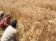 پاکستان: سوشلسٹ انقلاب اور زرعی سوال