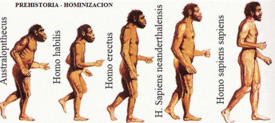 Human-Evolution Ensaio Sobre a Amizade