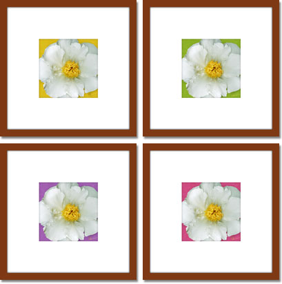 Single White Peony series of digital paintings