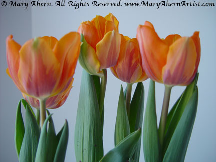Snapshot of some Orange Tulips I used as the basis of this series of Art works