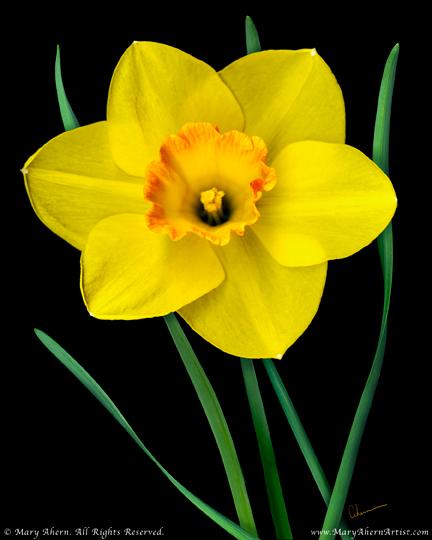 "Mary Ahern the Artist's ""Single Yellow Daffodil"""