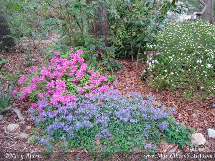 Mary Ahern Artist. Phlox stolonifera, 'Sherwood Purple' and Karume azalea in the woodland walks.