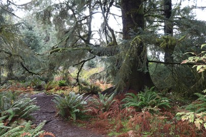 Trail from Sitka Residency