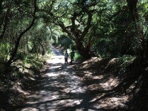 Hike from Marchenilla to Jimena de la Frontera, early June 2015