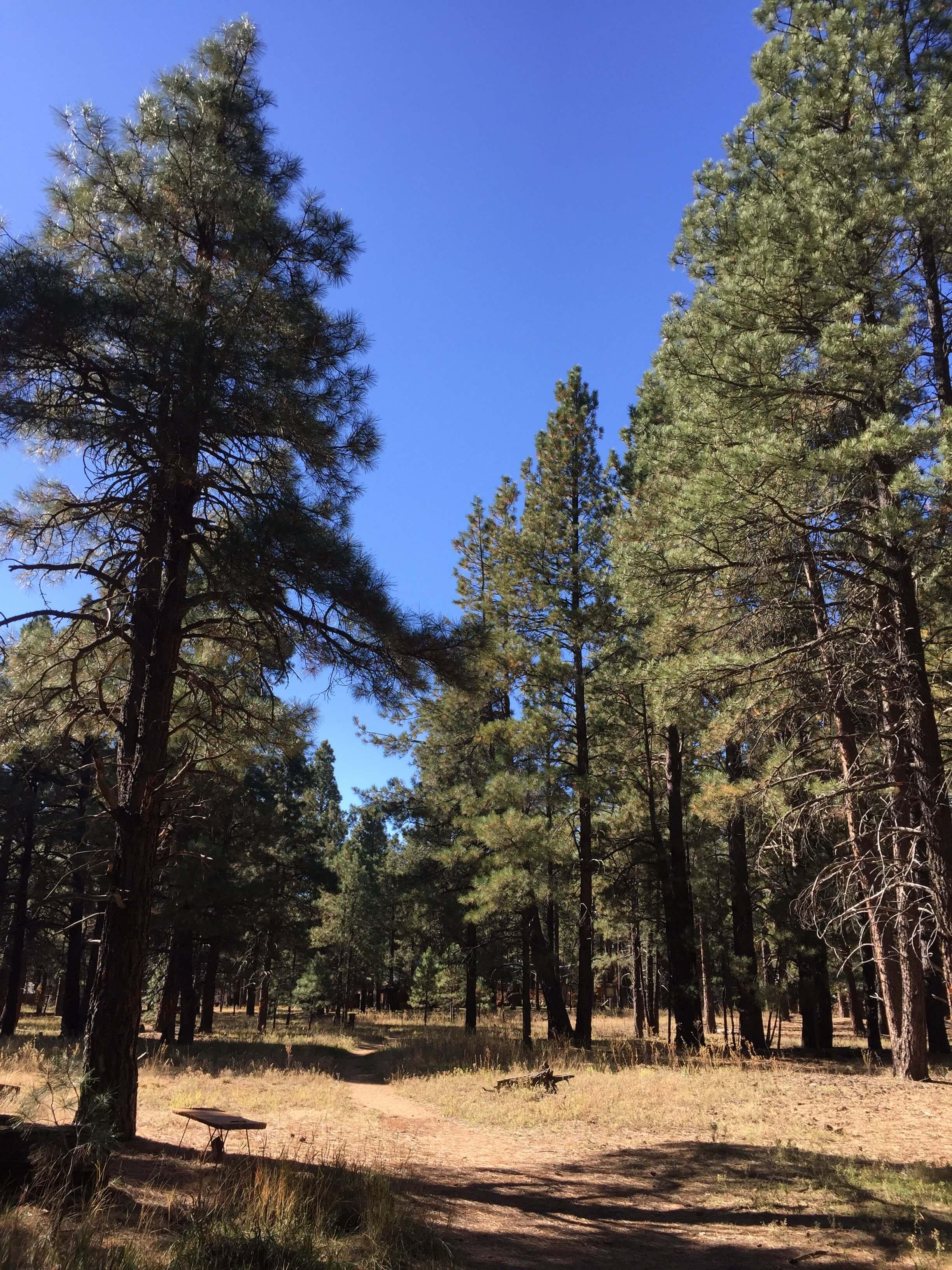 Mountainaire, Arizona - Just outside Flagstaff