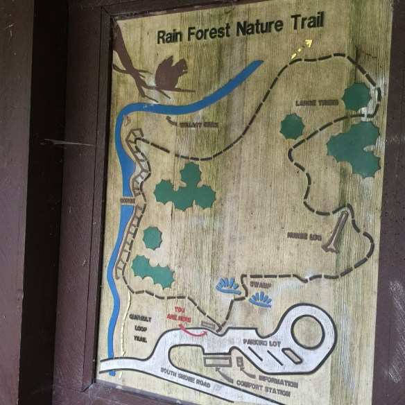 Trail in the Quinault Rainforest