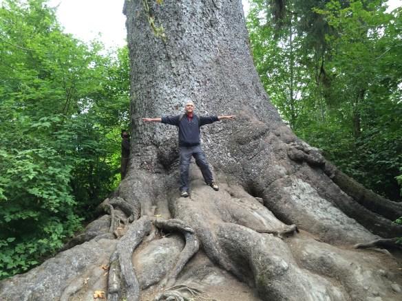 Immense tree, tiny John!