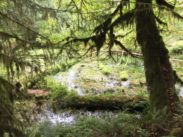 Moss in a swampy area