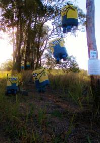 KA06 Scarecrow Name: Minion Mayhem Owner: Kelsie Hughes 110 O Farrel Road Kandanga 4570 Registration Centre: Kandanga Category: Artistic