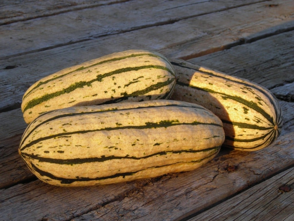 Quick, Easy, Delicious: Delicata Squash