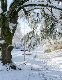 Tree with swing in snow