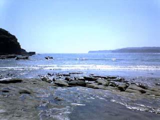 千葉の海です。