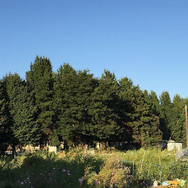 小学校の校庭の木々が、夕陽に輝いている。