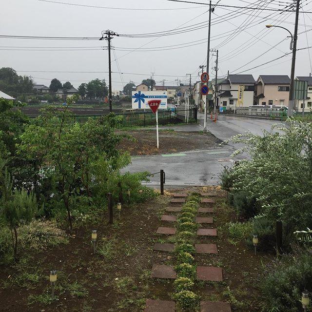 強い雨が降ったけど、全然涼しくならない。