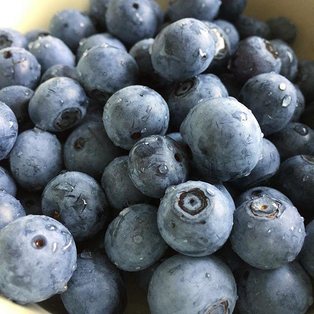 自宅のブルーベリーが収穫出来ました。#masasfactory