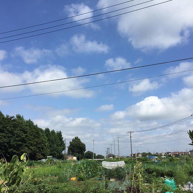 蝉の声。青い空。白い雲。今日の暑さは程よくて、子供の頃の夏休みを思い出す。#masasfactory