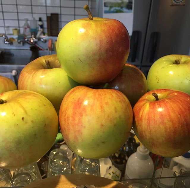 今年採れたリンゴ。何にしようかな?#masasfactory