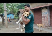 dog rescue video