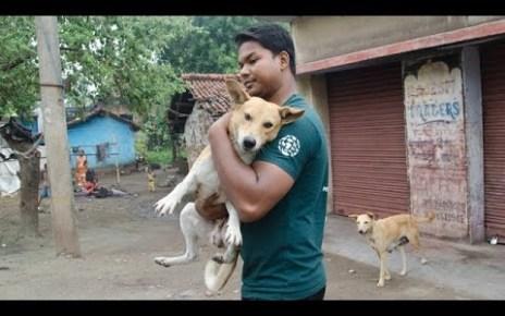 dog rescue video