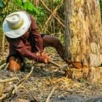 木こりの話〜効率的に目標を達成するための考え方〜