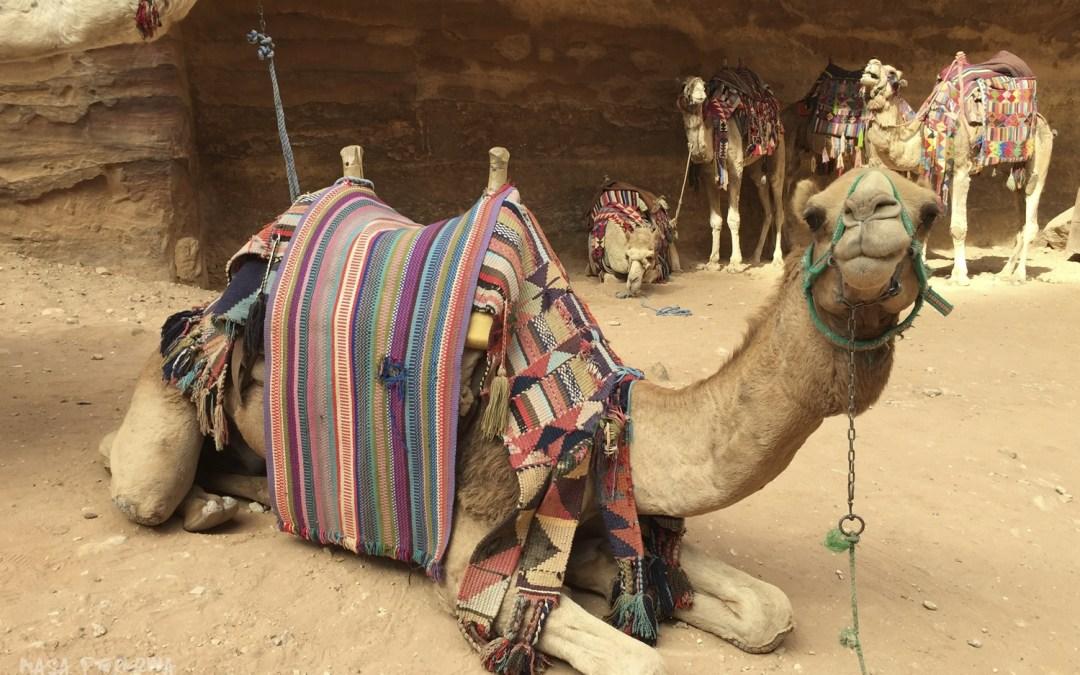 Co zobaczyć w Jordanii? Atrakcje, Jordan Pass, wizy, przejścia graniczne