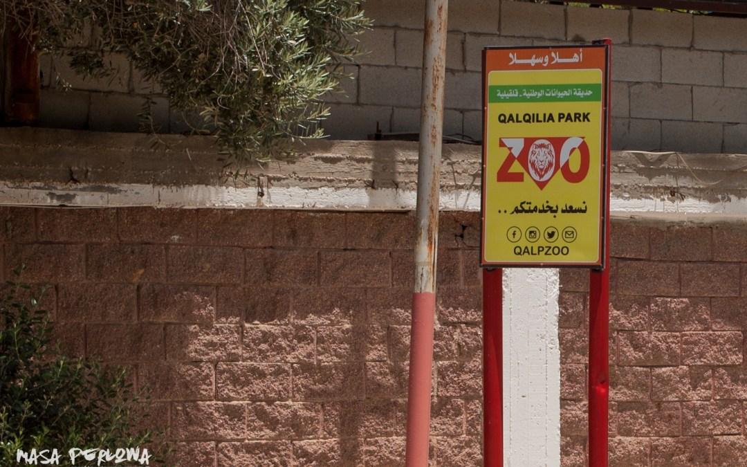 Przejmujące czy przerażające? Jedyne zoo w Palestynie