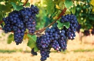 mascarilla de uva para las manchas