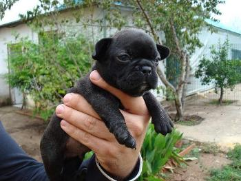 Consejos para Elegir una Raza Canina