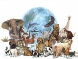 29 de Abril Día del Animal en Argentina